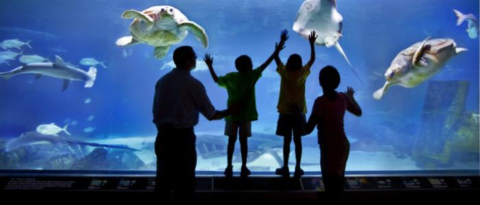 How to Buy Good Aqua One Fish Tanks